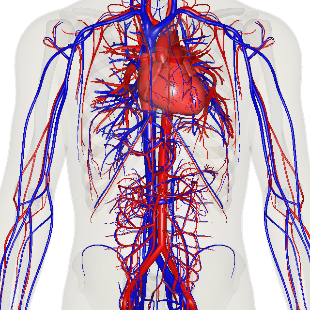 Circulatory system my storybook ccuart Choice Image