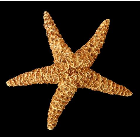 Starfish Png on Bird Anatomy