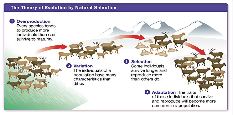 Uncategorized Natural Selection Worksheets evolution and natural selection worksheets termolak my storybook